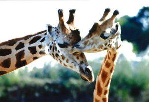 Séjour inoubliable au parc botanique et animalier proche de Vannes